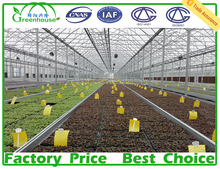 XL Used Hot Galvanized Steel Pipe Frame Polycarbonate Sheet Greenhouses for Sale