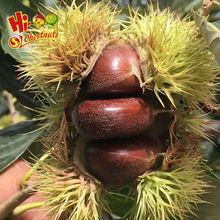 wholesale cheap china shandong fresh chestnut