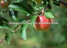 Fresh Red Gala Apple