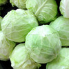 fresh green cabbage for export and hot sale