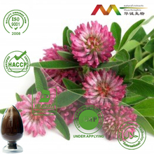 ISO/HACCP/KOSHER Top Quality Red Clover Extract