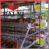 Chicken Eggs Poultry Cage Sell Good in Kampala Uganda
