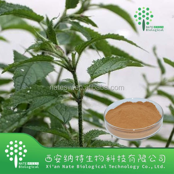 Healthy supplement Nettle extract powder 7% silica with low price