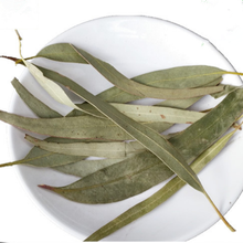 natural remedies for arthritis natural constipation remedies Eucalyptus leaves