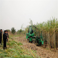 New design good quality durable whole stalk sugarcane harvester