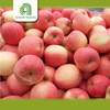 Hot selling fresh green apples organic apples for wholesales