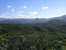 PALM OIL LAND FOR SALE