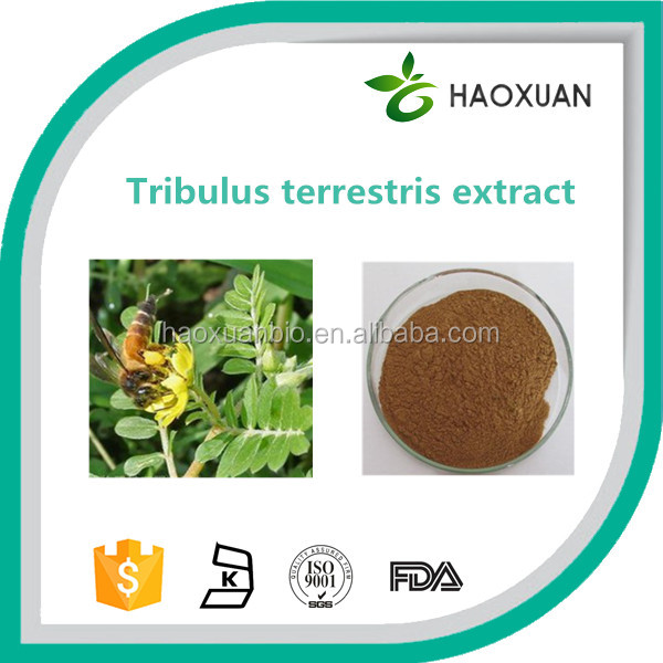100% Natural pure tribulus terrestris extract planted in China