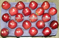 fresh apple fruit for sale