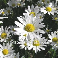 100% Pure Natural Organic Chamomile Extract/ 1.2%-98% Apigenin/ Best Chamomile Flower Extract