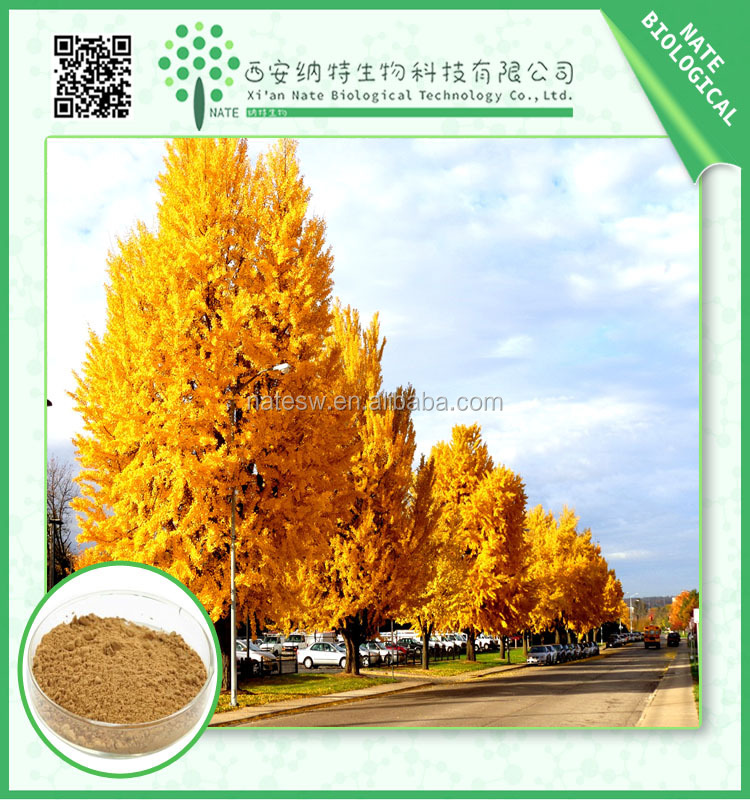 Extract Of Folium Ginkgo extract powder Ginkgo Flavone Glycosides 24% and Terpene Lactones 6% from honest suppliers
