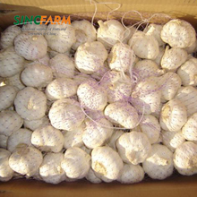 China fresh garlic in USA