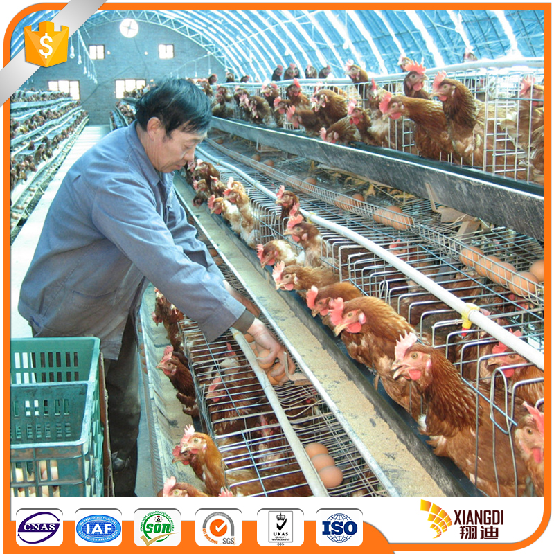 Best Quality chicken cage for sale seed catcher