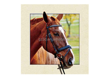 Professional factory 5d lenticular picture of handsome horse