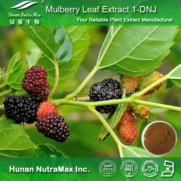 Top Quality Mulberry Leaf Extract Sodium Copper Chlorophyllin 100%