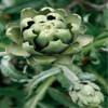 100%Natural Artichoke Extract FDA approved manufacture
