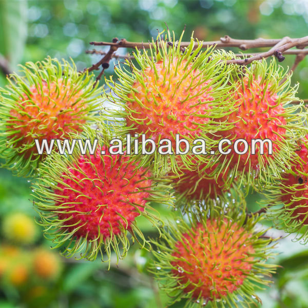 High Quality Fresh Rambutan