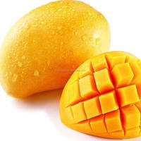 hot sale high quality mango fruit export from india