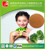 Alibaba Supply Natural Broccoli Extract Powder 20:1,white broccoli,frozen broccoli powder