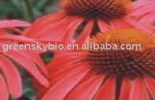 Echinacea Purpurea Extract (Herbal Extract) Polyphenols 4%;Cichoric acid 2%,4%