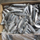 sea frozen horse mackerel fresh fish for malaysia
