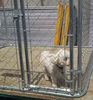 China direct factory temorary dogs fence / galvanized lows fence dog kennels and run / iron fence dog kennel