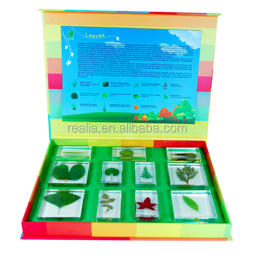 Leaves Specimen set for kids educational use