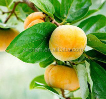 Persimmon Extract Powder Contains Tannin