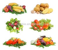 100% Organic Best Vegetable Powder (Eco cert, ISO, KOSHER, HALAL, MUI HALAL, HACCP )