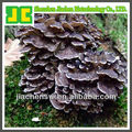 Natural Dried Maitake Mushroom Powder with 6:1