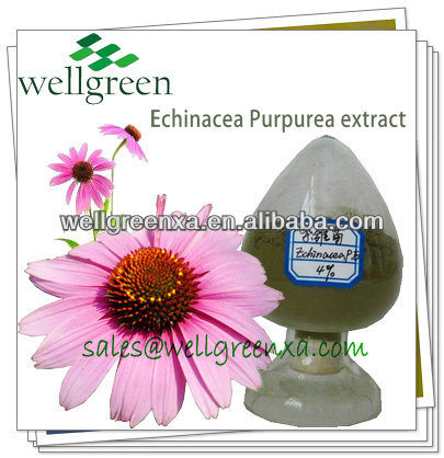 Factory Supply 100% Natural Echinacea P.e