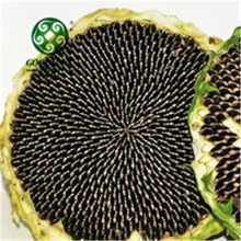 Wholesale Chinese Non-GMO/ Organic Sunflower Seeds in Shell