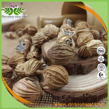 High quality Amomum Extract 2:1,4:1,8:1 for bodybuilding supplements