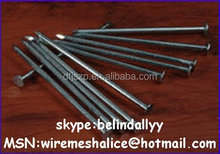 Corrugated iron nails/common nails distributor in China