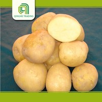 Hot selling fresh potato importers in dubai with low price