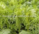 2012 Black Cohosh extract (Triterpene Glycosides )