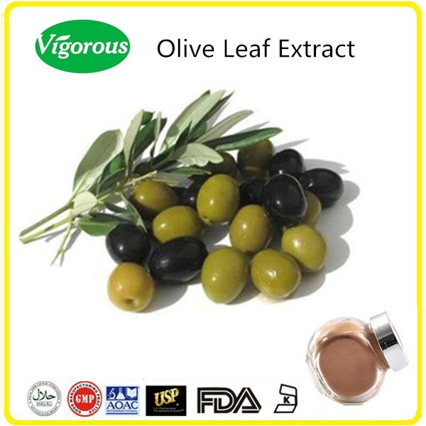 Organic high quality Olive Leaf Extract Olea europaea L powder