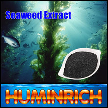 Huminrich Kelp Source Seaweed Extract Sea Plant Black Brown Seaweed Fertilizer