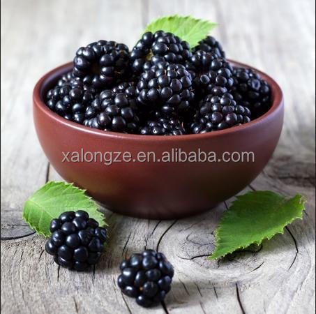 Blackberry Extract anti-aging with anthocyanidins 5%-25%