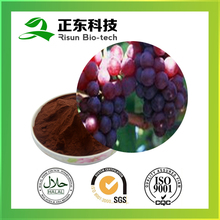 Quality guarantee 100% natural grape seed 95% OPC Grape Seed Extract