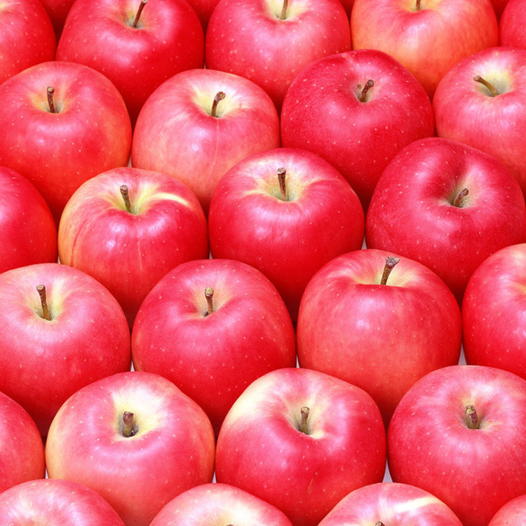 shanxi bulk fresh new crop china fresh fruit <fuji huaniu qinguan gala red star green apple