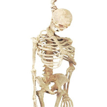 High Quality Halloween life size skeleton props