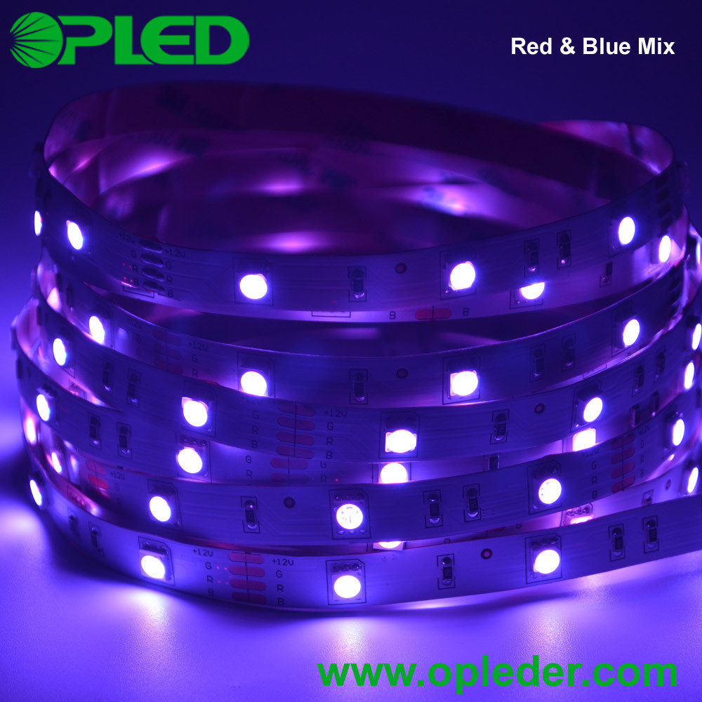 ce/rohs 5050 rgb led strip 30 leds per meter with 3 years warranty