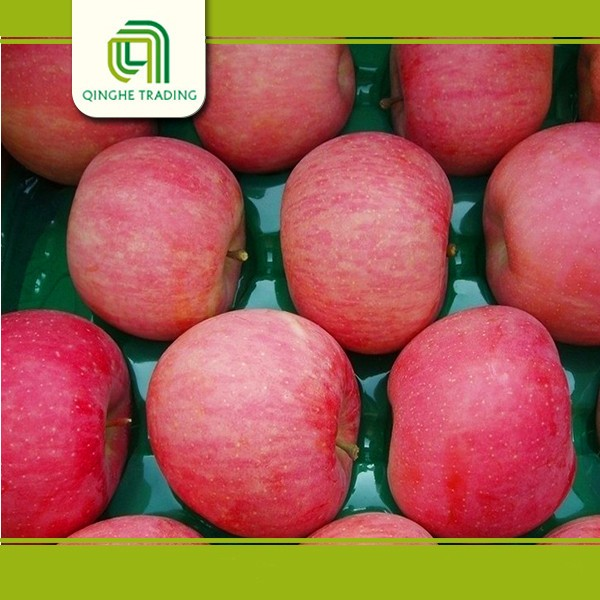 Hot selling low price fresh citrus fruits from china