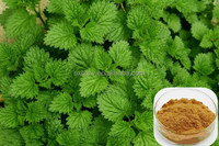 Best quality hotsell 100% natural nettle extract powder