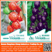 Hot Sale Chinese Vegetable Seeds High Yield Hybrid F1 Tomato Seeds
