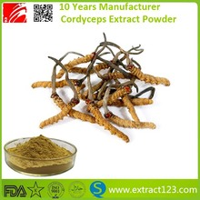 cordyceps sinensis mushroom extract powder benefits