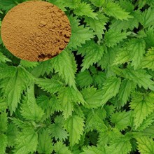 Chinese Nettle Organic silicon Herb Extract nettle leaf tea extract