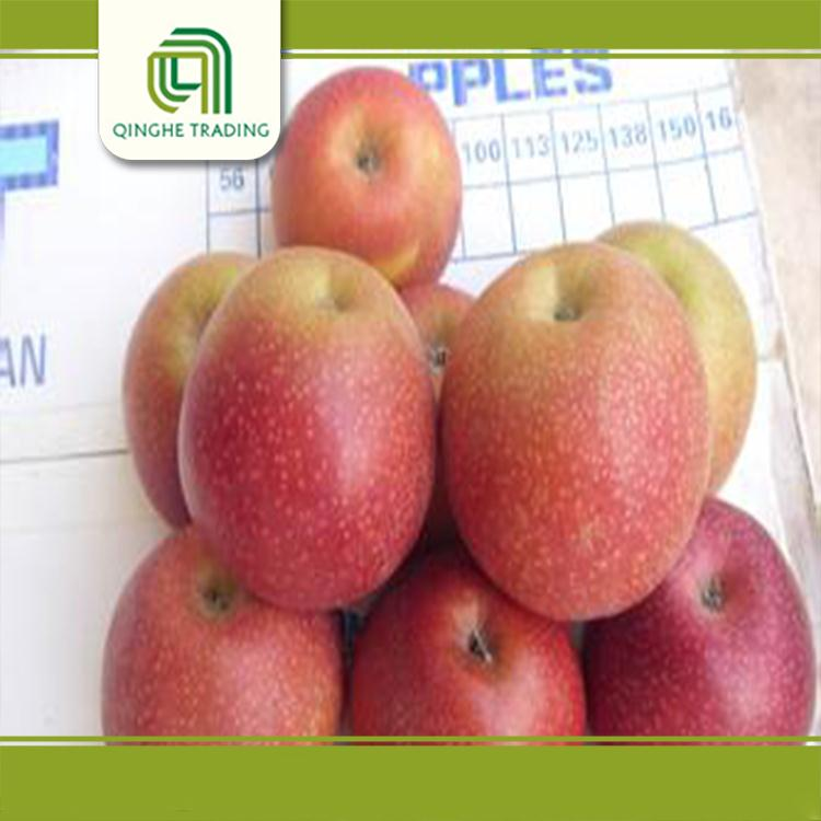 fresh fruits and vegetables fresh qinguan apple with low price