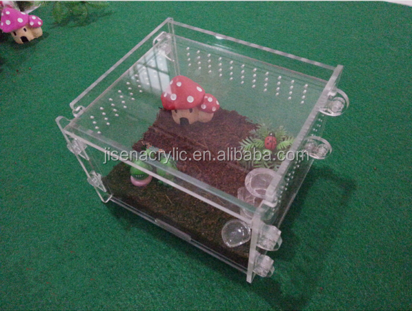 Popular Whosale Acrylic Reptile crawler spider scorpion centipede beetle insect feeding box Insect pet boxs